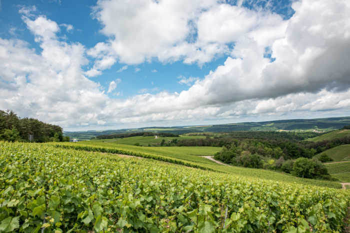 Vignoble de l'Aube © O. DOUARD